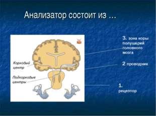 Анализатор состоит из … 1. рецептор 3. зона коры полушарий головного мозга 2