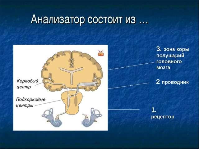 Анализатор состоит из … 1. рецептор 3. зона коры полушарий головного мозга 2...