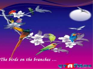 The birds on the branches …