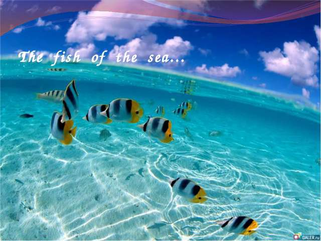 The fish of the sea…