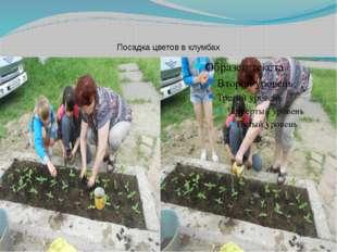 Посадка цветов в клумбах