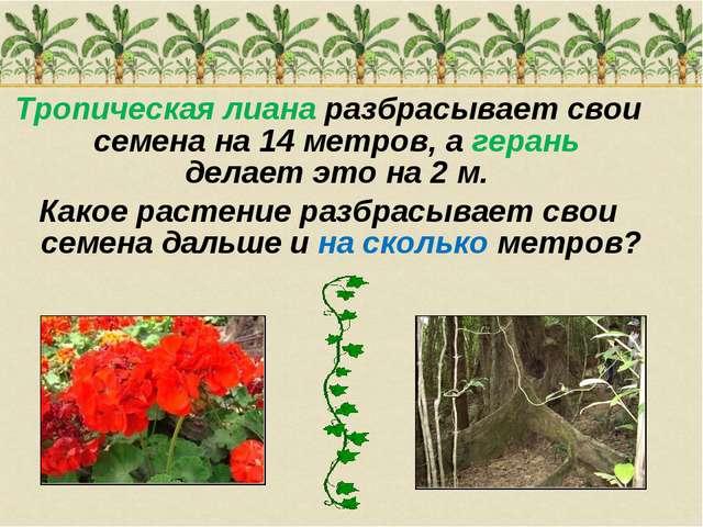 Тропическая лиана разбрасывает свои семена на 14 метров, а герань делает это...