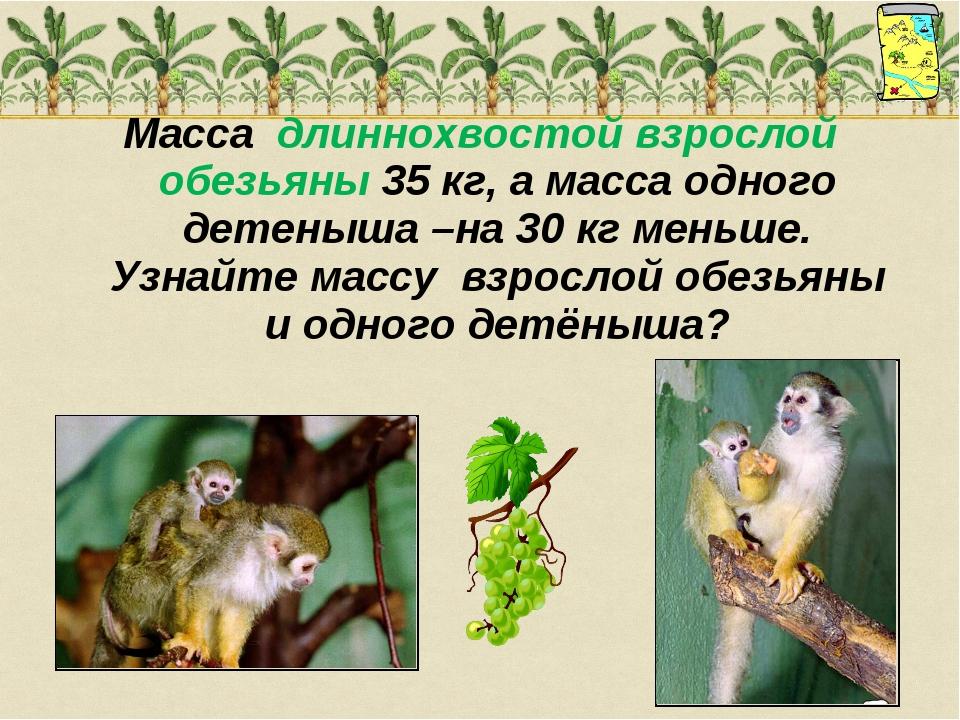 Масса длиннохвостой взрослой обезьяны 35 кг, а масса одного детеныша –на 30 к...