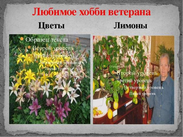 Любимое хобби ветерана Цветы Лимоны