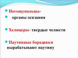 Ногощупальцы- органы осязания Хелицеры- твердые челюсти Паутинные борадавки