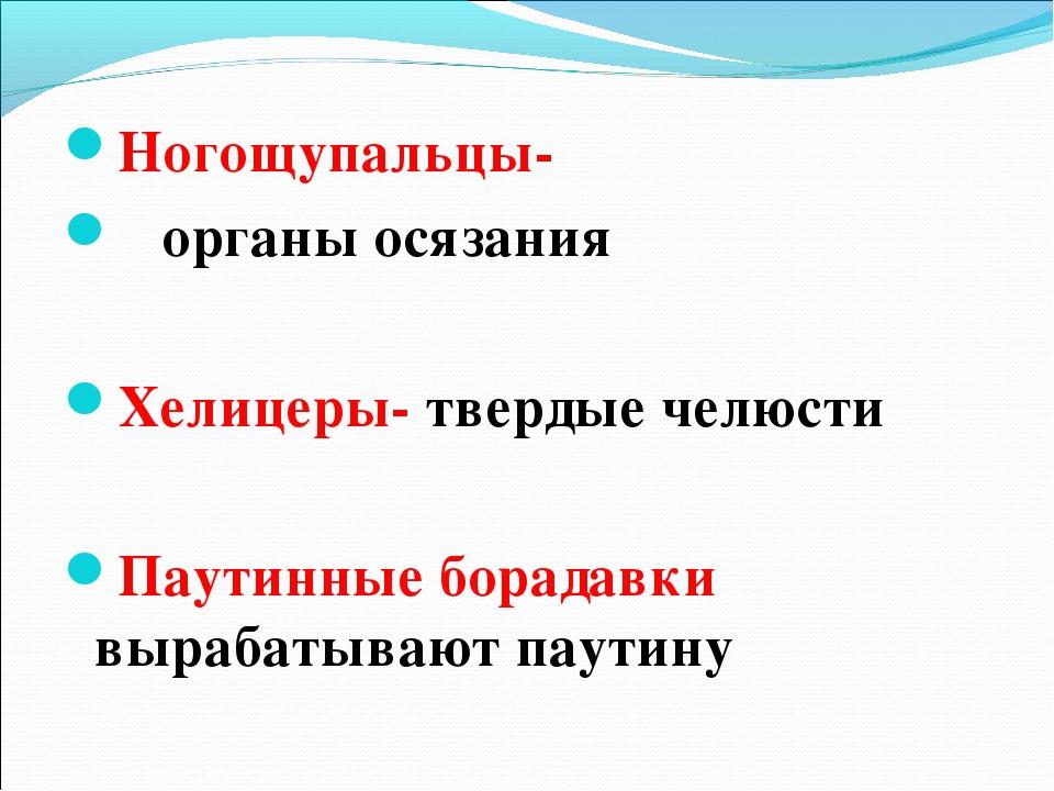 Ногощупальцы- органы осязания Хелицеры- твердые челюсти Паутинные борадавки...