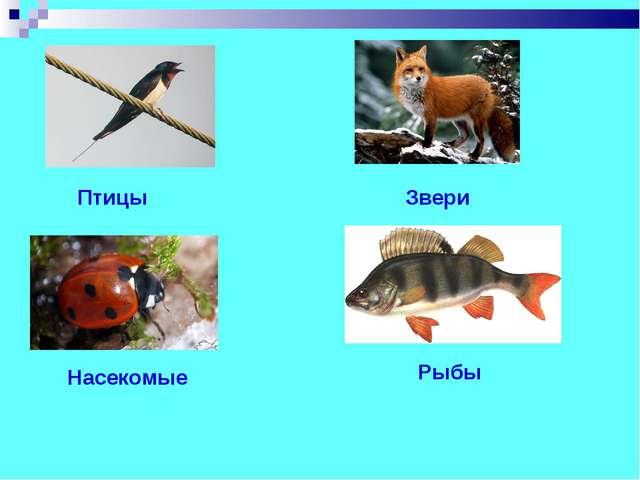 Звери Птицы Рыбы Насекомые