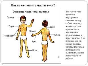 Какие вы знаете части тела? Все части тела человека неразрывно связаны между