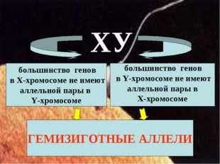 большинство генов в Х-хромосоме не имеют аллельной пары в Y-хромосоме больши