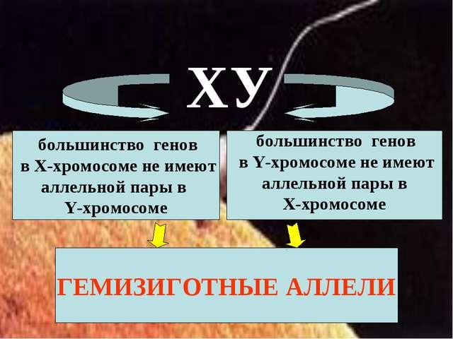 большинство генов в Х-хромосоме не имеют аллельной пары в Y-хромосоме больши...