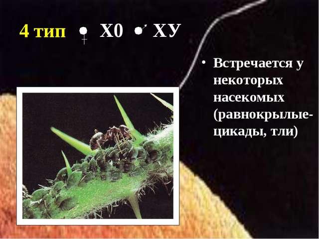 4 тип Встречается у некоторых насекомых (равнокрылые- цикады, тли) Х0 ХУ