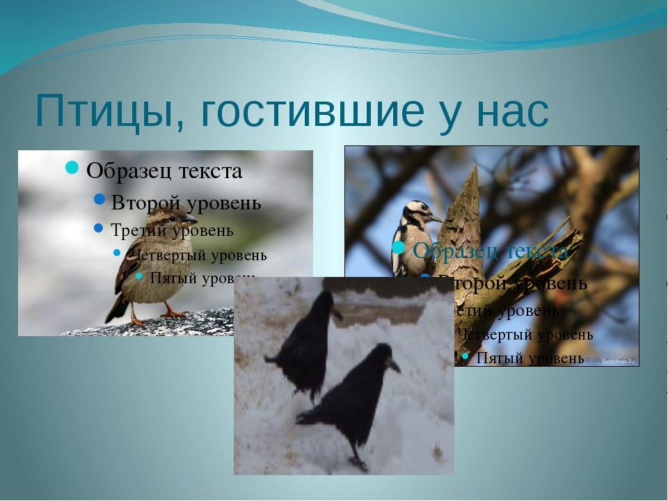Птицы, гостившие у нас