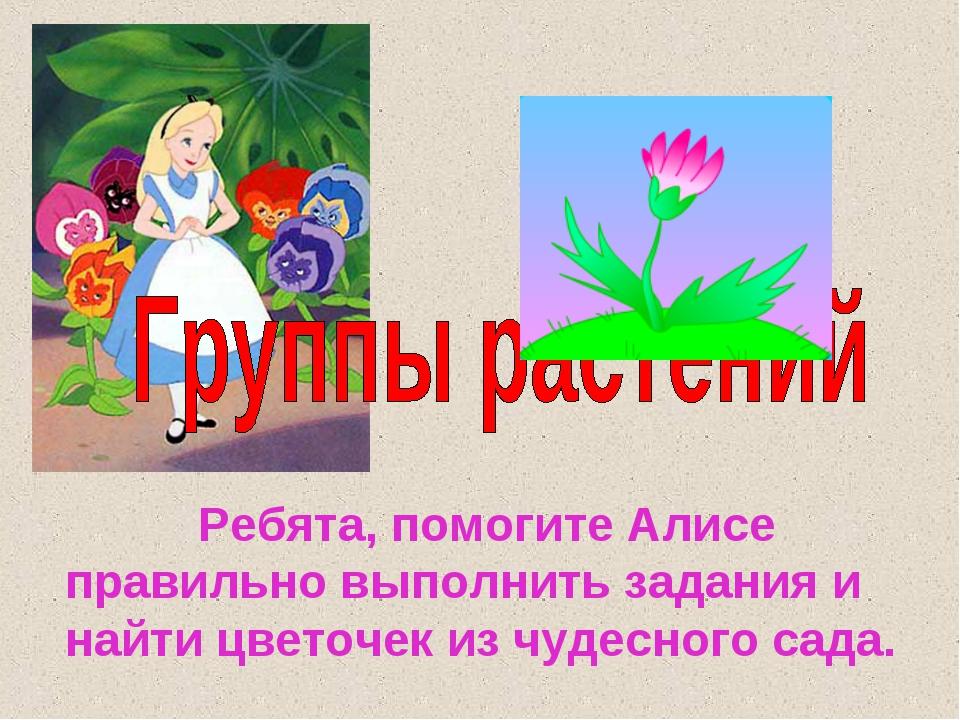 Ребята, помогите Алисе правильно выполнить задания и найти цветочек из чудес...