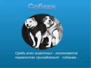 Среди всех животных - космонавтов первенство принадлежит собакам.