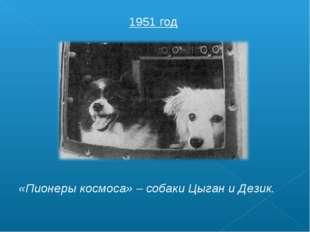 1951 год «Пионеры космоса» – собаки Цыган и Дезик.