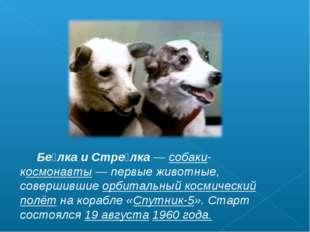 Бе́лка и Стре́лка— собаки-космонавты— первые животные, совершившие орбитал