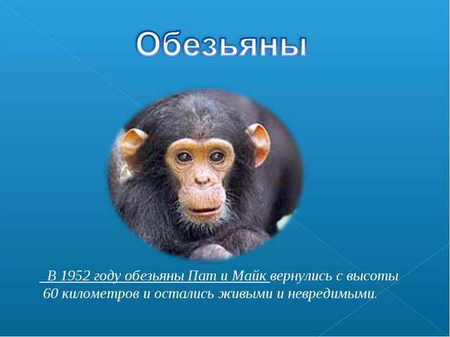 В 1952 году обезьяны Пат и Майк вернулись с высоты 60 километров и остались...