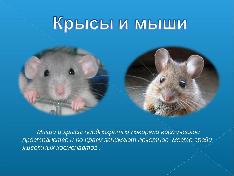 Мыши и крысы неоднократно покоряли космическое пространство и по праву заним...
