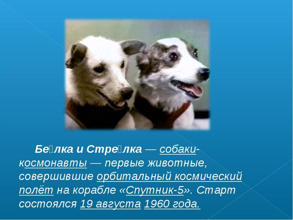 Бе́лка и Стре́лка— собаки-космонавты— первые животные, совершившие орбитал...