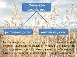 животноводство растениеводство Сельское хозяйство Растениеводство -отрасль