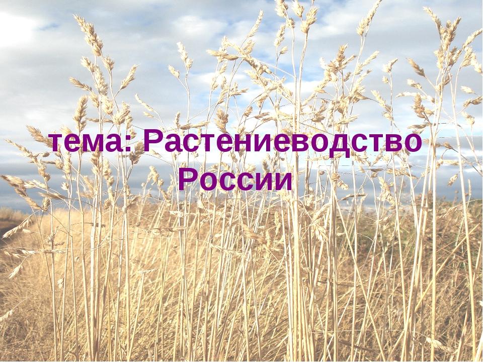 тема: Растениеводство России