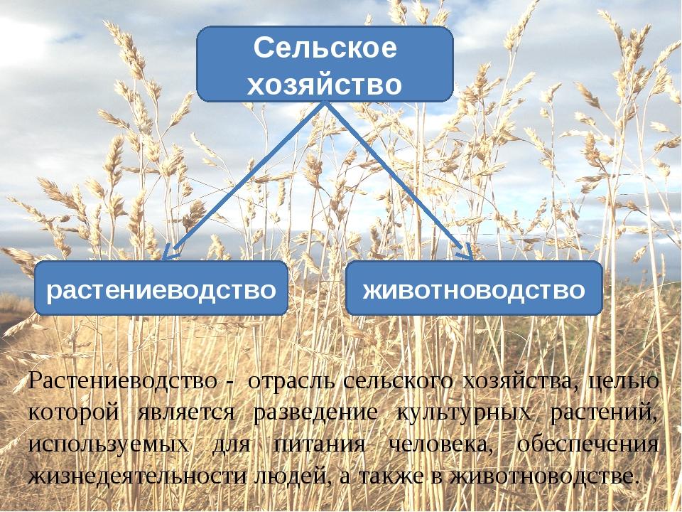 животноводство растениеводство Сельское хозяйство Растениеводство -отрасль...