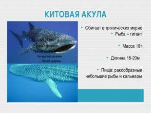 КИТОВАЯ АКУЛА Обитает в тропических морях Рыба – гигант Масса 10т Длинна 18-2