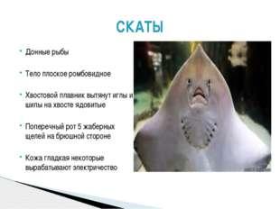 Донные рыбы Тело плоское ромбовидное Хвостовой плавник вытянут иглы и шипы на