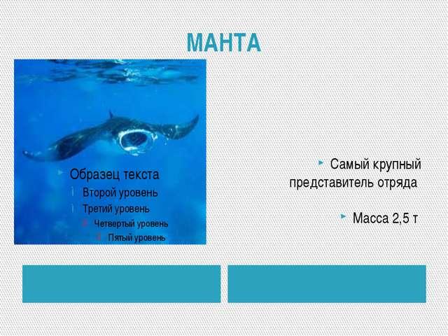 МАНТА Самый крупный представитель отряда Масса 2,5 т