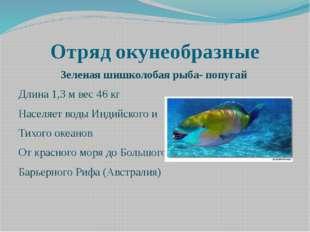 Отряд окунеобразные Зеленая шишколобая рыба- попугай Длина 1,3 м вес 46 кг На
