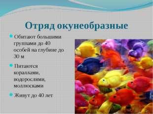 Отряд окунеобразные Обитают большими группами до 40 особей на глубине до 30 м