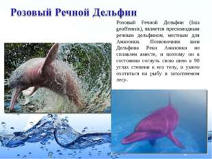 Розовый Речной Дельфин (Inia geoffrensis), является пресноводным речным дельф
