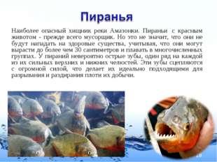 Наиболее опасный хищник реки Амазонки. Пираньи с красным животом - прежде вс