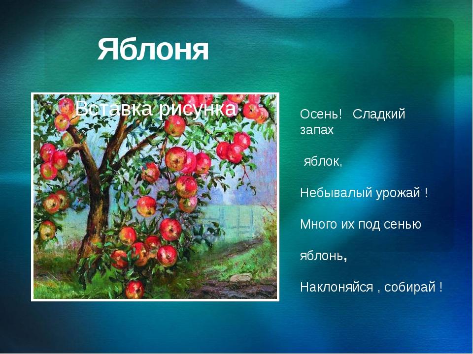 Яблоня Осень! Cладкий запах яблок, Небывалый урожай ! Много их под сенью ябло...
