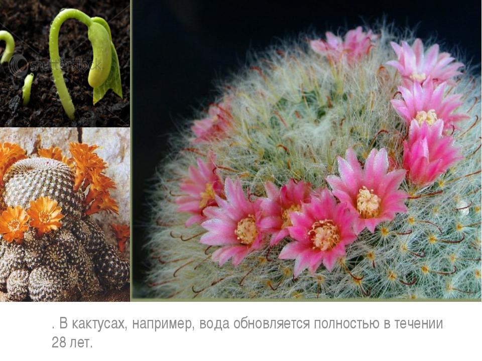 . В кактусах, например, вода обновляется полностью в течении 28 лет.