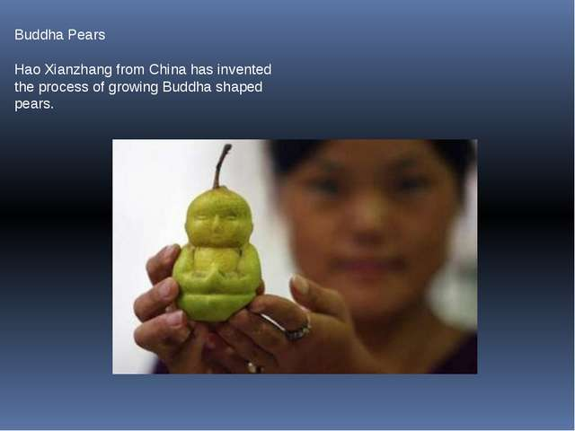 Buddha Pears Hao Xianzhang from China has invented the process of growing Bud...