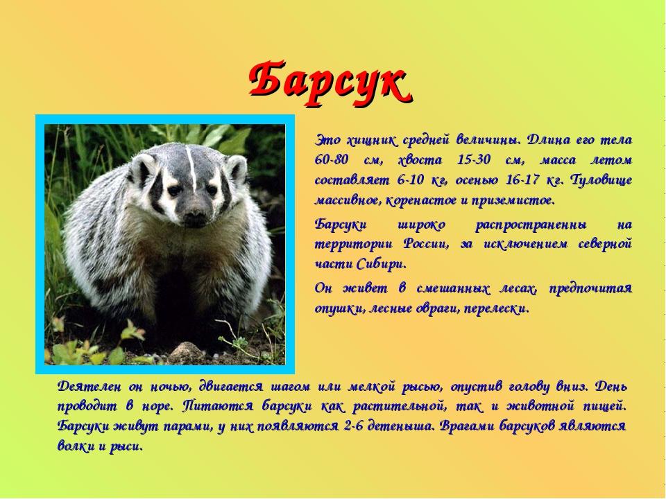 Барсук Это хищник средней величины. Длина его тела 60-80 см, хвоста 15-30 см...