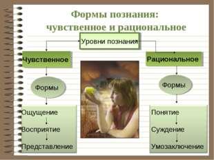 Формы познания: чувственное и рациональное Уровни познания Чувственное Рацион