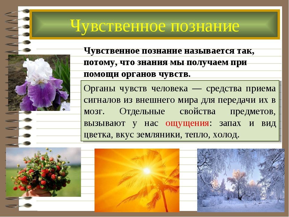 Чувственное познание Чувственное познание называется так, потому, что знания...