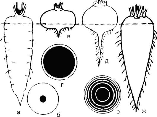 http://vmede.org/sait/content/Biologiya_botanika_zai4ikova_2013/img/8939.jpg