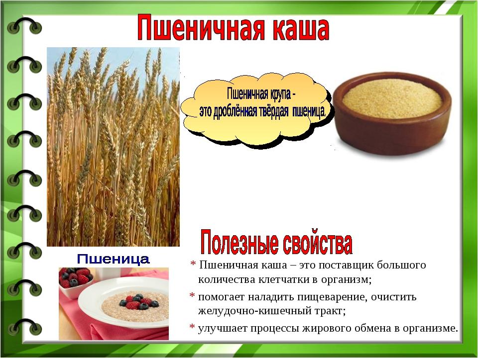 * Пшеничная каша – это поставщик большого количества клетчатки в организм; *...