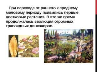 При переходе от раннего к среднему меловому периоду появились первые цветков