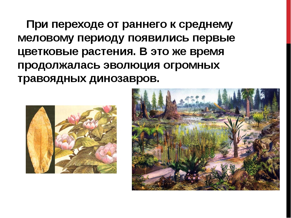 При переходе от раннего к среднему меловому периоду появились первые цветков...