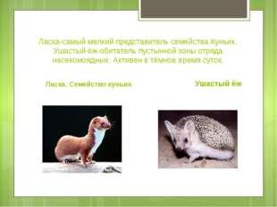 Ласка-самый мелкий представитель семейства Куньих. Ушастый ёж-обитатель пусты