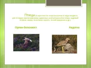 Птицы.В окрестностях озера Баскунчак 62 вида гнездится, для 16 видов зарегис