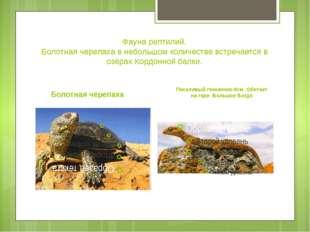 Фауна рептилий. Болотная черепаха в небольшом количестве встречается в озёрах