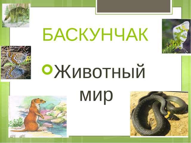 БАСКУНЧАК Животный мир