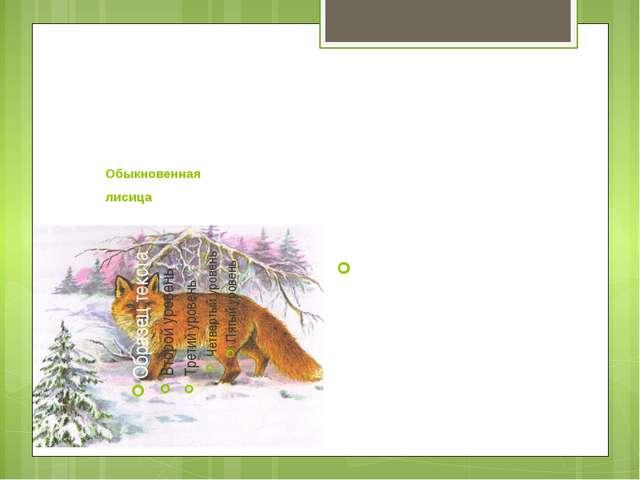 Обыкновенная лисица Численность лис около озера Баскунчак очень большая.