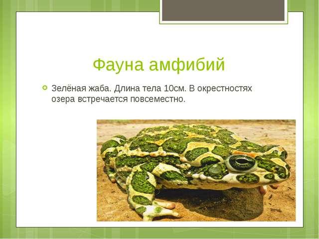 Фауна амфибий Зелёная жаба. Длина тела 10см. В окрестностях озера встречается...