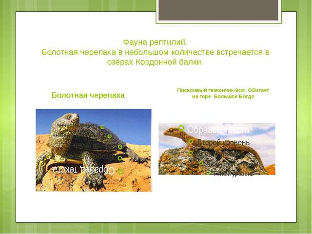 Фауна рептилий. Болотная черепаха в небольшом количестве встречается в озёрах...